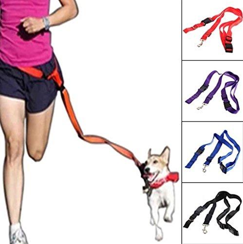 Winwin,Nylon Running Pet Dog Leash Rope Training Slip Adjustable Traction Collar Rope - Pembroke Website