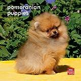Pomeranian Puppies 2013 7X7 Mini Wall