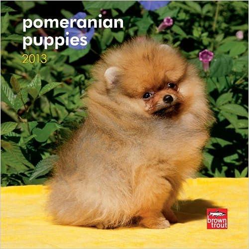85%OFF Pomeranian Puppies 2013 7X7 Mini Wall - colegioprovidencia cl