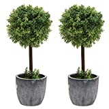 Set of 2 Small Realistic Artificial Boxwood Topiary Trees / Faux Tabletop Plants w/ Gray Pots