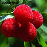 HOO PRODUCTS- 10 Particles / Bag Arbutus Unedo Strawberry Tree Delicious Chinese Fruit Seeds For Healthy And Home Garden Easy Grow Loss Promotion!