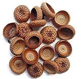 Tin Roof Treasure Natural Organic Acorn Caps Pack of 100