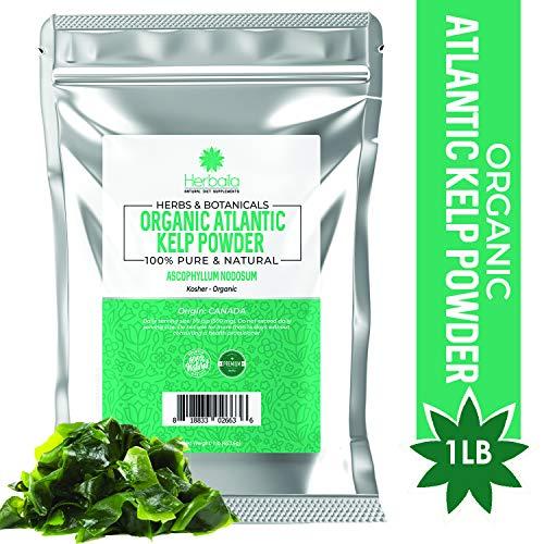 Organic Kelp Powder 1 Pound, Wholefood Dietary Supplement, Raw Sun-Dried Kelp Seaweed from Canada, 100% Pure, Non-GMO, Gluten-Free & Kosher ()