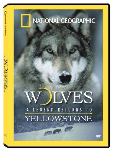 Amazon.com: Wolves: A Legend Returns to Yellowstone: David Douglas: Movies & TV