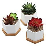 Small Ceramic Hexagonal Succulent Planters, Flower Pots with Bamboo Saucers, Set of 3, White