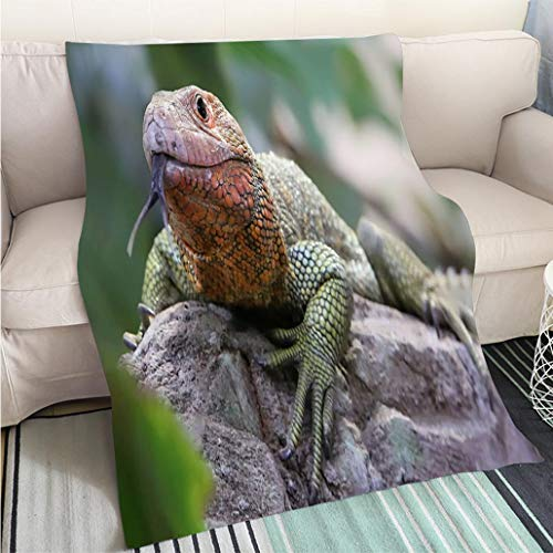 Custom Antibacterial and wear Resistant Blanket Close up View of a Northern Caiman Lizard Perfect for Couch Sofa or Bed Cool Quilt