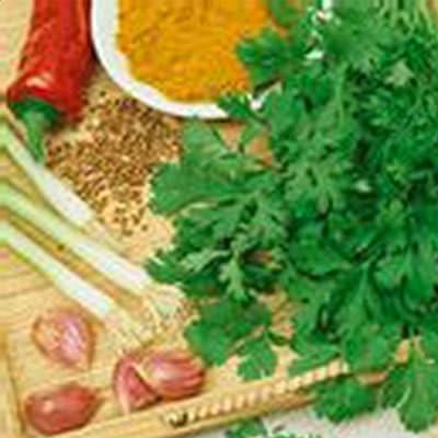 Slow Bolt Cilantro Herb Garden Seeds - Non-GMO, Heirloom, Organic - Herbal Gardening & Microgreens Seeds (Coriander)