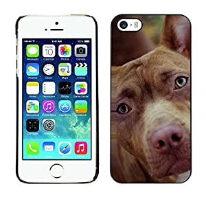 Paccase / SLIM PC / Aliminium Casa Carcasa Funda Case Cover - Mutt Mongrel Brown Mixed Breed - Apple Iphone 5 / 5S