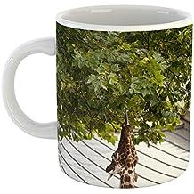 Westlake Art - Coffee Cup Mug - Natura Artis - Modern Picture Photography Artwork Home Office Birthday Gift - 11oz (69m f87)