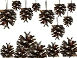 "Banberry Designs Pine Cone Ornaments - Set of 36-1 1/2"" White-Tipped Painted Christmas Pinecone Ornaments String"