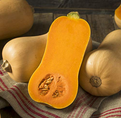 (Sweet Yards Seed Co. Organic Butternut Squash Seeds 'Waltham' - Approx. 20 Open Pollinated Non-GMO Seeds)