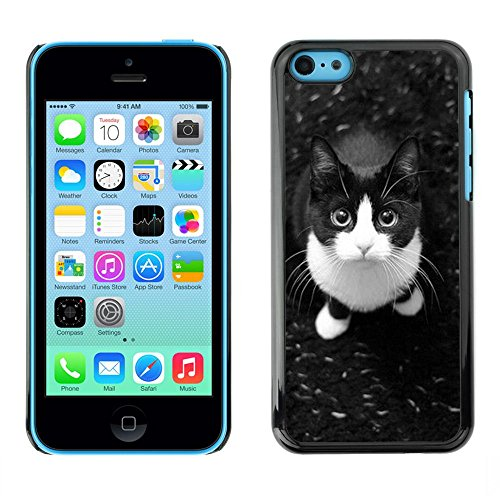 Plastic Shell Protective Case Cover || Apple iPhone 5C || Shorthair Housecat Cat @XPTECH