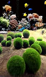 5 Nano Luffy Moss Balls : Saltwater Fish Tank Friendly, Ideal for Clownfish, Ocellaris, Damsel Fish, Dottybacks, Rays: Easy to Maintain, Provides Oxygen and Absorbs Nitrates