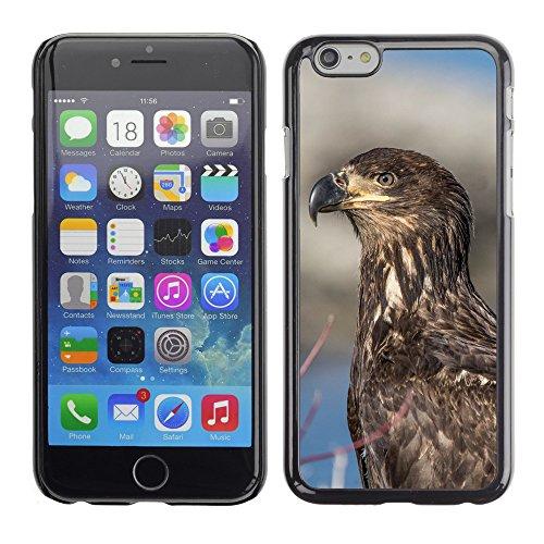 """Premio Sottile Slim Cassa Custodia Case Cover Shell // F00031525 Aigle closeup // Apple iPhone 6 6S 6G 4.7"""""""