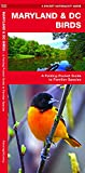 Maryland & DC Birds: A Folding Pocket Guide to Familiar Species (A Pocket Naturalist Guide)