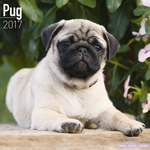 Pug-Calendar-2017-Dog-Breed-Calendars-2016-2017-wall-calendars-16-Month-by-Avonside