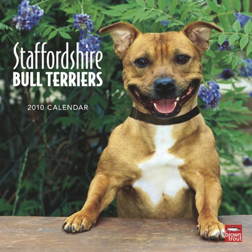 Staffordshire Bull Terriers 2010 Square Wall (Multilingual Edition)