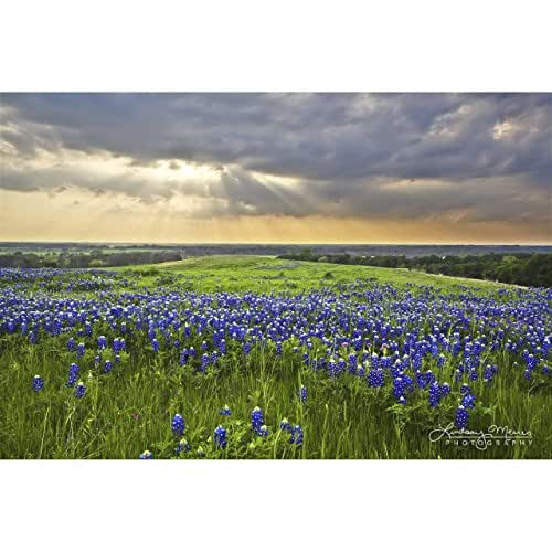Texas Home Decor Bluebonnet Sunbeams By Travlin Photography Multiple Sizes 5x7