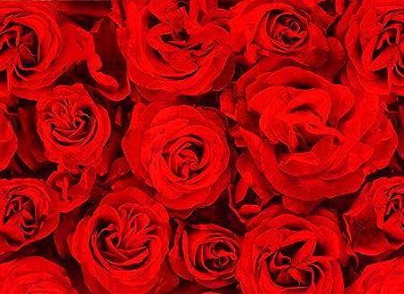 GeschenkpapierRed Roses Geburtstag Valentinstag Geschenkpapier f/ür Muttertag