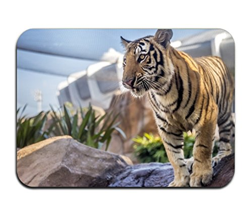 (Andrew Brown The LSU Tigers' New Tiger Makes His Debut Bathroom Kitchen Rug Mat Welcome Door MatBathroom Printed)