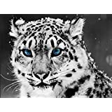 Snow Leopard Wild Cat Animal Canvas Art Huge Print Poster TXHOME D2408 (60X80cm Poster)