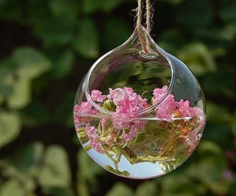 c675790cb Haodou florero de cristal Jarrón hidropónico Forma de bola clara decoración  de cristal de la planta de la chuchería florero decoración Contenedor ...