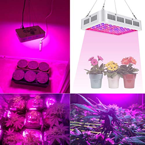 LED Grow Lights 1000W Double Chips Full Spectrum with 4 Years Local Warranty Perfect for Greenhouse Hydroponic Indoor Plants Veg and Flower All Phases of Plant Growth by Anordsem by Anordsem (Image #4)