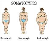 Are You An Endomorph?