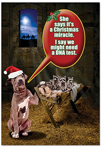 12 'DNA Test' Boxed Christmas Cards with Envelopes 4.63 x 6.75 inch, Funny Dog and Raccoons Holiday Notes, Silly Nativity Scene Christmas Notes, Religious Humor, Animal Humor B2550XSG