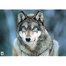 Grey Wolf Poster Art Print