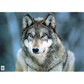 Pyramid America Grey Wolf Poster Art Print