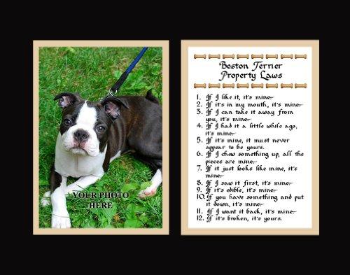 Boston Terrier Property Laws Wall Decor Humorous Pet Dog Saying Gift