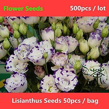 Amazon Rosaceae Plants Fleur Artificiel Novel Plant