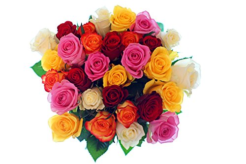 50 Farm Fresh Farmers Choice Roses Bouquet | Long Stem Fresh Farmers Choice Rose Delivery by BloomsyBox