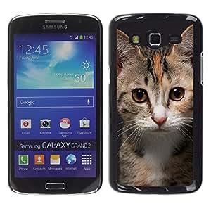 CASECO - Samsung Galaxy Grand 2 - Young Kitten Cat - Delgado Negro Plástico caso cubierta Shell Armor Funda Case Cover - Gatito joven del gato