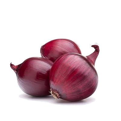 David's Garden Seeds Onion Short-Day Red Burgundy SL1398 (Red) 200 Non-GMO, Heirloom Seeds : Garden & Outdoor