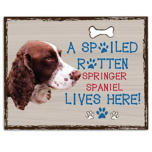 "Springer Spaniel-Dog Poster Print-10 x 8"" Wall Decor Sign-Ready To Frame.""A Spoiled Rotten Springer Spaniel Lives Here"". Pet Wall Art for Home-Kitchen-Garage. Gift-English Springer Spaniel Owners! 9"