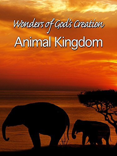 Wonders of God's Creations: Animal Kingdom