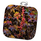 3dRose Danita Delimont - Gardens - Autumn ivy embellishing a wall in a garden, Paris, France - 8x8 Potholder (phl_257620_1)