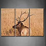 First Wall Art - 3 Panel Wall Art Bull Elk During Fall In Yellowstone Nationnal Park Dry Grass Painting Pictures Print On Canvas Animal The Picture For Home Modern Decoration piece (Stretched By Wooden Frame,Ready To Hang)