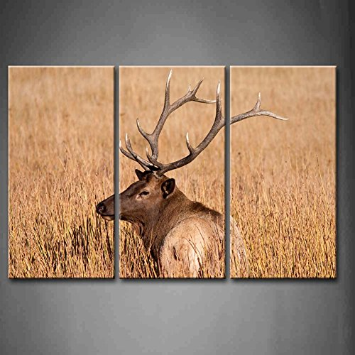 First Wall Art - 3 Panel Wall Art Bull Elk During Fall In Yellowstone Nationnal Park Dry Grass Painting Pictures Print On Canvas Animal The Picture For Home Modern Decoration piece (Stretched By Wooden Frame,Ready To Hang) by Firstwallart