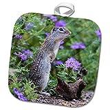 3dRose Danita Delimont - Squirrels - Mexican Ground squirrel, now Rio Grande Ground Squirrel in wildflowers - 8x8 Potholder (phl_279492_1)