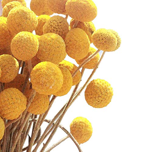 Billy Buttons - KALOR Dried Flowers Branch Farmhouse Stylet Craspedia Yellow Billy Balls Home Decor DIY 10 Stems