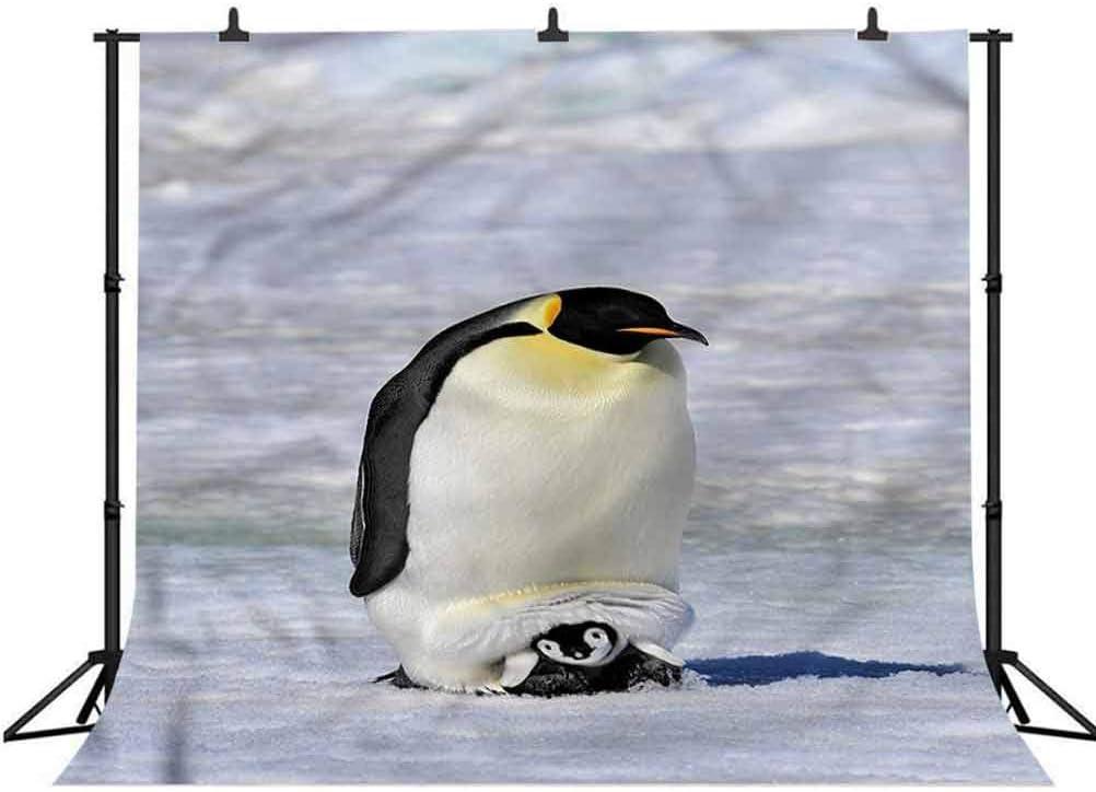 6x6FT Vinyl Photography Backdrop,Penguin,Antarctica Wildlife Birds Photo Background for Photo Booth Studio Props