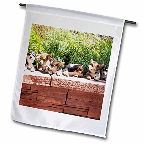 3dRose Danita Delimont – Dogs – Pembroke Welsh Corgi dog, flagstone wall – NA02 PWO0113 – PiperAnne Worcester – 18 x 27 inch Garden Flag (fl_140353_2) For Sale