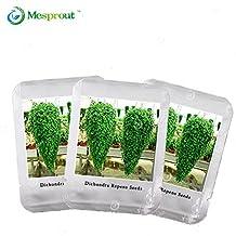 100 Pieces Dichondra Repens Lawn Seeds Decorative Garden Plants Flower Seeds Money Grass Hanging seeds 1 Professional Pack