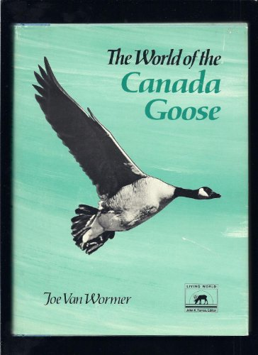canada geese - 2