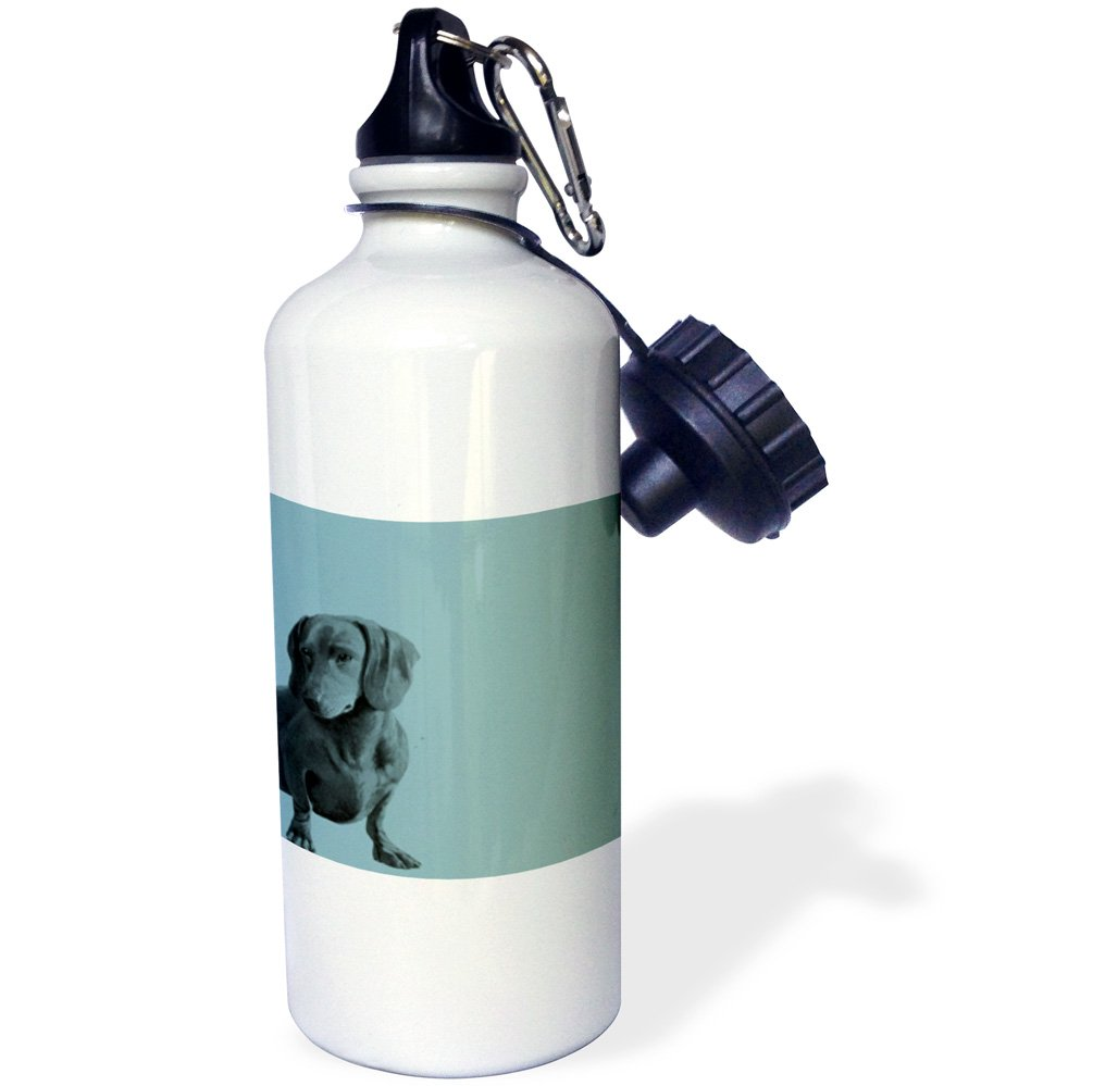 3dRose wb_130560_1 Adorable Daschund Dog Pets Animals Sports Water Bottle, 21 oz, White