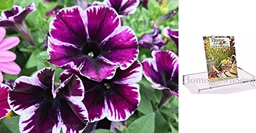 unia Seeds, 250 Seeds, Sophistica Purple Stripe Petunia ()