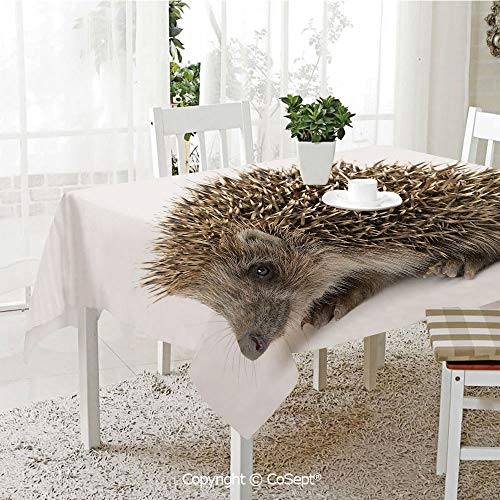 Polyester tablecloth,Small Cute Mammal with Spiked Hair on Its Back and Sides Wildlife Photography Decorative,Fashionable Table Cover Perfect for Home or Restaurants(60.23